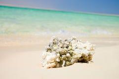 Coral muerto en la batería del Mar Rojo Fotos de archivo