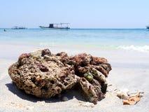 Coral muerto en la playa Imágenes de archivo libres de regalías