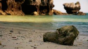 Coral muerto grande en una playa tropical almacen de video