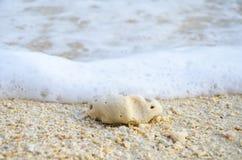 Coral na praia Fotografia de Stock Royalty Free