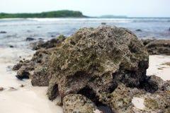 Coral na praia Foto de Stock Royalty Free