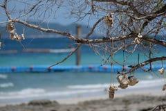 Coral na praia Imagens de Stock