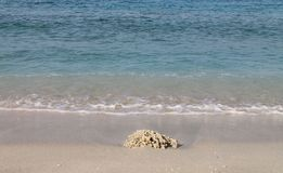 Coral na praia da ilha de Gili Trawangan Fotografia de Stock
