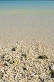 Coral nas praias Fotografia de Stock Royalty Free