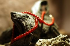 Coral necklace Stock Image