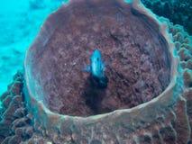Coral no parque nacional de Komodo, Indonésia Fotografia de Stock