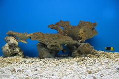 Coral and ocean Royalty Free Stock Image