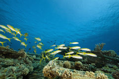 Coral, ocean and fish Stock Photography