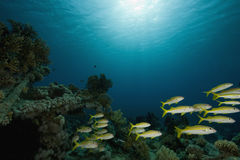 Coral, ocean and fish Stock Photo