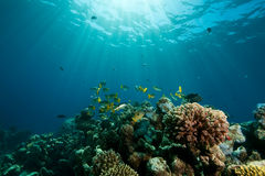 Coral, ocean and fish stock images