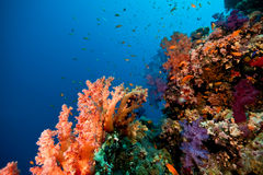 Coral, ocean and fish Royalty Free Stock Images