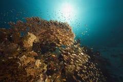 Coral, oceano do sol e peixes Imagens de Stock
