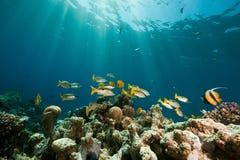 Coral, oceano e peixes foto de stock