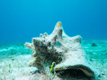 Coral off Isla Mujeres, mexico Royalty Free Stock Image