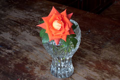 Coral and orange rose in a vase Stock Photo
