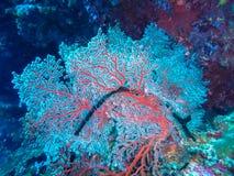 Coral, Papua Nuova Guinea Stock Photos