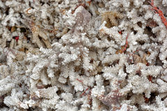 Coral pattern. Close-up view to dried coral pattern royalty free stock photo