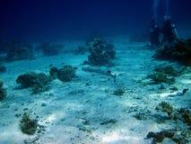 Coral, pescados y buceadores Fotografía de archivo libre de regalías