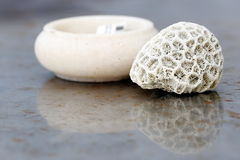 Coral. A Piece of Broken Coral Displayed on Table In an Island Resort Royalty Free Stock Photos