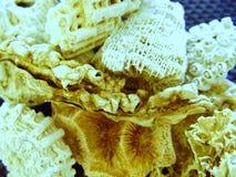 Coral Pieces från nord - östliga Australien royaltyfri bild