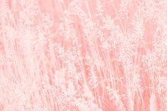 Coral pink background, grass texture pattern, trendy color. Coral pink background, grass texture pattern, copy space stock photography