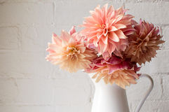 Coral pink dahlias (cropped). Coral pink dahlias in a white jug against a white brick wall (cropped Stock Photography