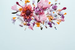 Coral pink flowers. Pastel blue floral background. Top view, flat royalty free stock photo