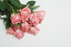 Coral Pink Rose Flower Isolated grupo do ramalhete da flor no fundo branco Copie o espaço imagem de stock