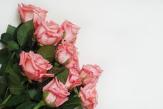 Coral Pink Rose Flower Isolated grupo do ramalhete da flor no fundo branco Copie o espaço Imagens de Stock