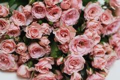 Coral Pink Rose Flower Isolated grupo do ramalhete da flor no fundo branco Copie o espaço Imagem de Stock Royalty Free