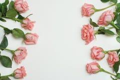 Coral Pink Rose Flower Isolated grupo do ramalhete da flor no fundo branco Copie o espaço imagens de stock royalty free