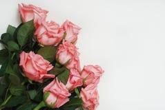Coral Pink Rose Flower Isolated manojo del ramo de la flor en el fondo blanco Copie el espacio Imagenes de archivo