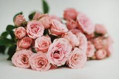 Coral Pink Rose Flower Isolated manojo del ramo de la flor en el fondo blanco Copie el espacio Fotos de archivo