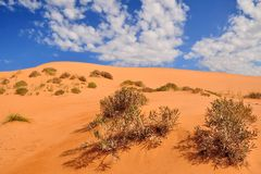 Coral pink sand dune with shrub and blue sky with white clouds Stock Photos