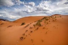 Coral Pink Sand Dunes cerca de Zion National Park Utah fotos de archivo