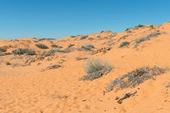 Coral Pink Sand Dunes. State Park, Kanab, Utah Royalty Free Stock Photography