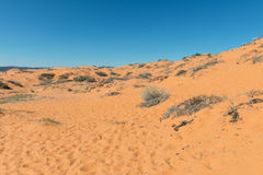Coral Pink Sand Dunes Royalty Free Stock Images