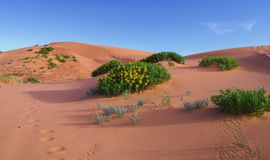 Coral Pink Sand Dunes State Park. 