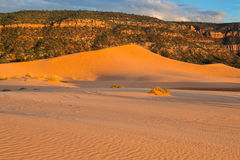 Coral Pink Sand Dunes State Park Stock Image