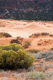 Coral Pink Sand Dunes State Park Royalty Free Stock Photography