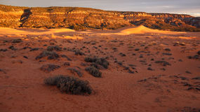 Coral Pink Sand Dunes State Park at Sunset Royalty Free Stock Photography
