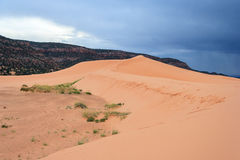 Coral Pink Sand Dunes State Park in Utah at sunset Royalty Free Stock Images