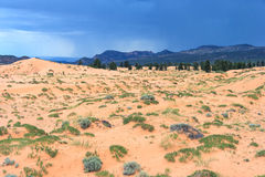Coral Pink Sand Dunes State parkerar i Utah på solnedgången Arkivbilder