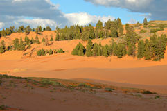 Coral Pink Sand Dunes. In Utah Stock Images