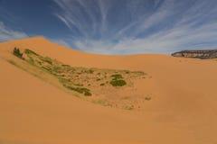 Coral Pink Sand Dunes In Utah Panoram Stock Afbeeldingen