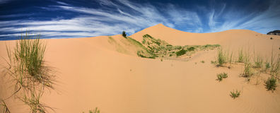 Coral Pink Sand Dunes In Utah Panoram Stock Photography