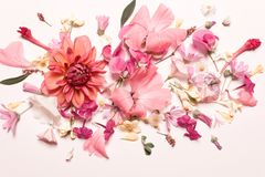 Coral pink yellow flowers. Pastel floral background. Top view, flat royalty free stock photo