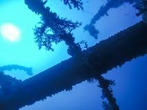 Coral Plants Growing sul mare subacqueo del relitto della nave in rosso, per esempio immagine stock libera da diritti
