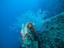 Coral Plants Growing sul mare subacqueo del relitto della nave in rosso, per esempio fotografie stock libere da diritti