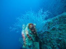 Coral Plants Growing on Underwater Ship Wreck in the Red Sea, Egypt royalty free stock photos